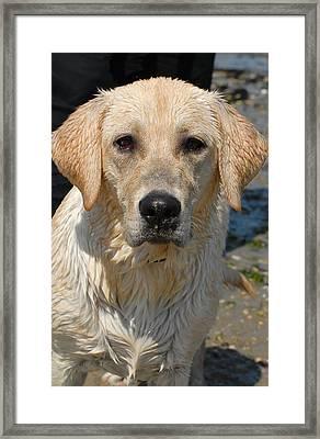Dog 77 Framed Print by Joyce StJames