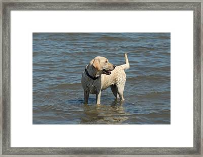Dog 78 Framed Print by Joyce StJames