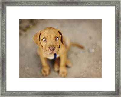 Dog Abandoned Framed Print by Manuel Orero Galan