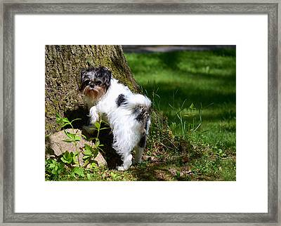 Dog And Tree Framed Print