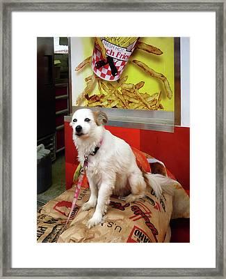 Dog At Carnival Framed Print