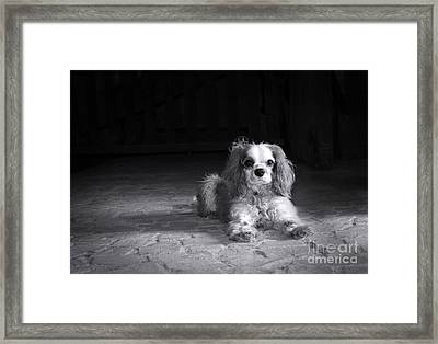 Dog Black And White Framed Print