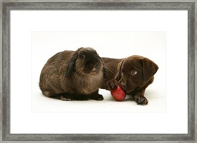 Dog Eating Apple With Rabbit Framed Print by Jane Burton
