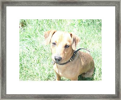 dog Framed Print by Igor Fedonyuk