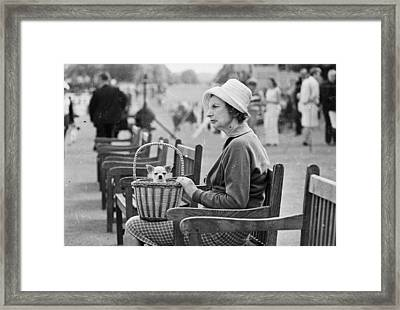 Dog In A Basket Framed Print by McCabe