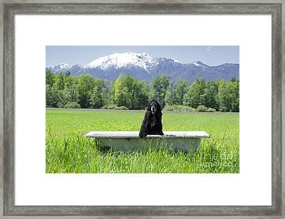 Dog In Bathtub Framed Print