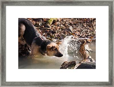 Dog In River Framed Print by Odon Czintos
