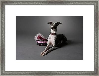 Dog In Sitting Position With Diva Bowl Framed Print by Chris Amaral