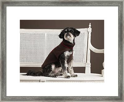 Dog In Sweater Sitting On Bench Framed Print by Ryan McVay