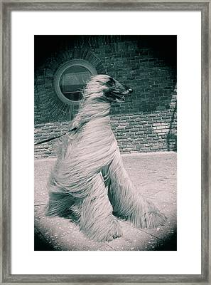 Dog In The Wind.  Framed Print by Giancarlo Sherman