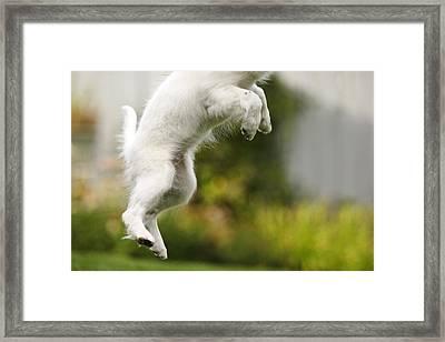 Dog Jumps Framed Print by Richard Wear