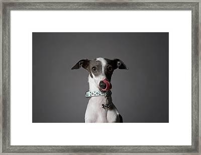 Dog Licking His Nose Framed Print
