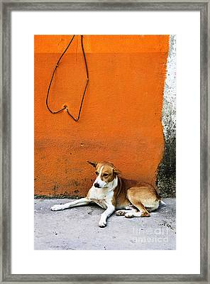 Dog Near Colorful Wall In Mexican Village Framed Print