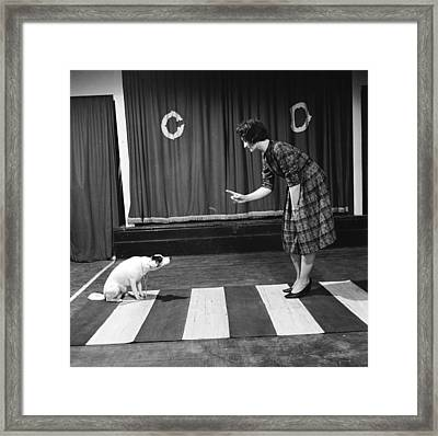 Dog On A Zebra Framed Print by John Drysdale
