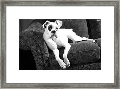 Dog On Couch Framed Print by Sumit Mehndiratta