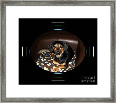 Dog On Sofa With Polka Dots Framed Print by Renee Trenholm