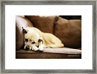 Dog On The Couch Framed Print