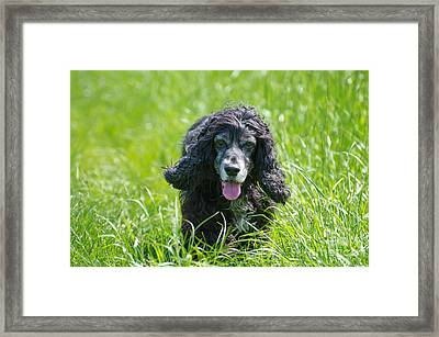 Dog On The Grass Framed Print by Mats Silvan