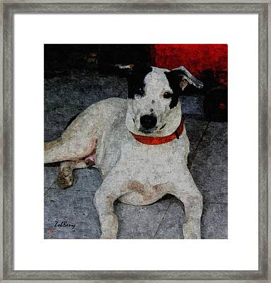 Dog Paintings  Framed Print by Zoh Beny
