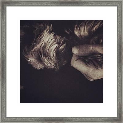 #dog #pet #love #yorkie Framed Print