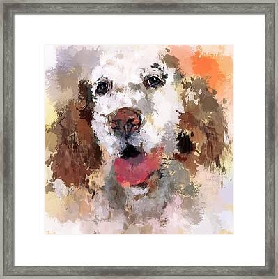 Dog Pet Framed Print by Yury Malkov