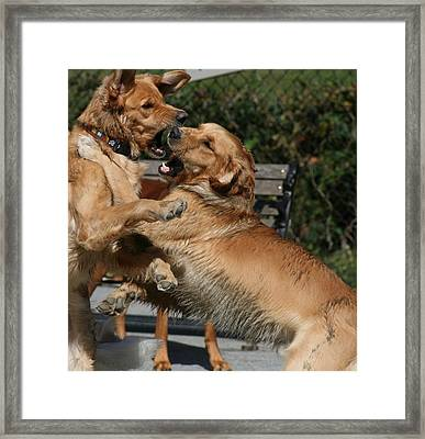 Dog Playground Framed Print by Valia Bradshaw