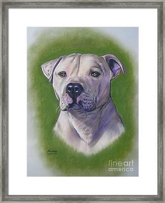 Dog Portrait Framed Print by Anastasis  Anastasi
