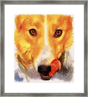 Dog Portrait Framed Print by Yury Malkov