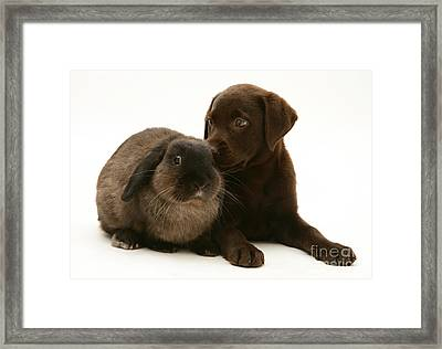 Dog Pup With Rabbit Framed Print