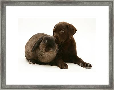 Dog Pup With Rabbit Framed Print by Jane Burton