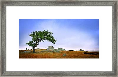 Dog Rocks Framed Print by Tim Nichols