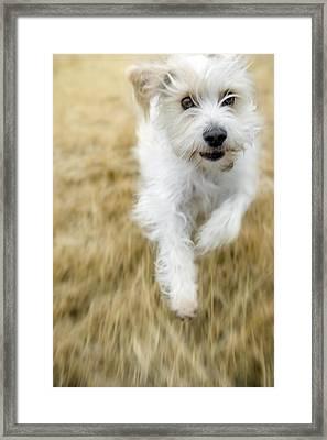 Dog Running Framed Print