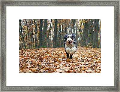 Dog Running In Forest Framed Print by Regarder tout autour de soi
