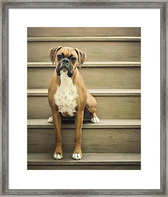 Dog Sitting On Step Framed Print by Jody Trappe Photography