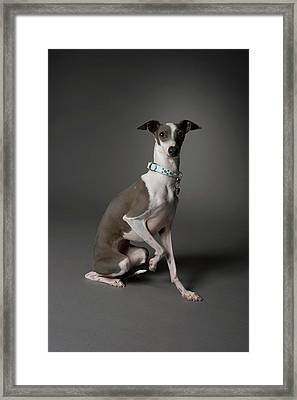 Dog Sitting With One Leg Up Framed Print by Chris Amaral