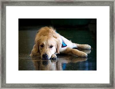 Dog Taking Rest Framed Print by © Stacey Osburn