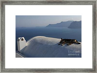 Dog Tired In Santorini Framed Print by Bob Christopher