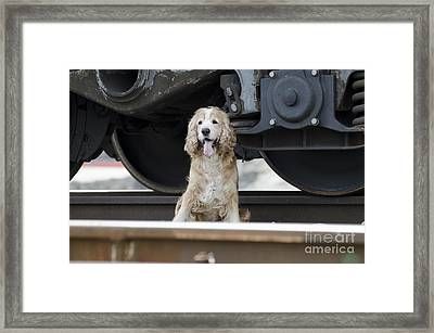Dog Under A Train Wagon Framed Print by Mats Silvan