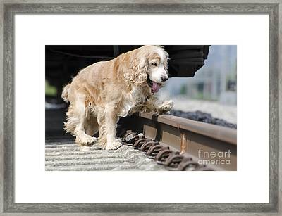 Dog Walking Over Railroad Tracks Framed Print by Mats Silvan