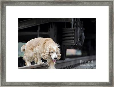 Dog Walking Under A Train Wagon Framed Print by Mats Silvan