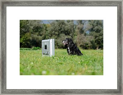 Dog Watching Tv Framed Print