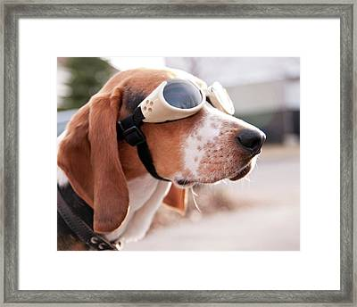 Dog Wearing Goggles Framed Print by Darren Boucher