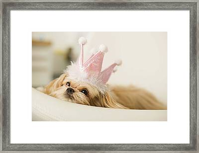 Dog With A Crown Framed Print