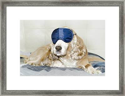 Dog With A Sleep Mask Framed Print by Mats Silvan