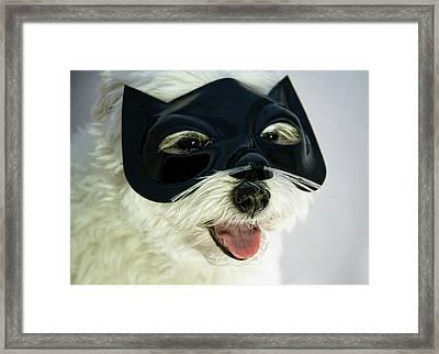 Dog With Cat Mask Framed Print by Carolyn Hebbard