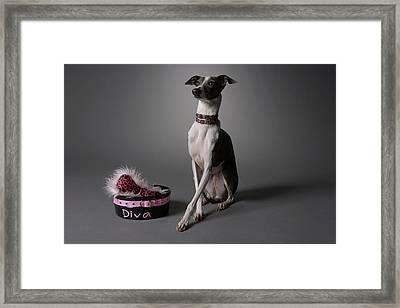 Dog With Diva Bowl Framed Print by Chris Amaral