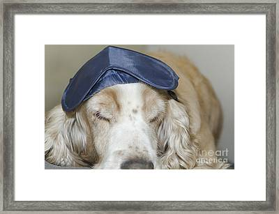 Dog With Sleep Mask Framed Print by Mats Silvan