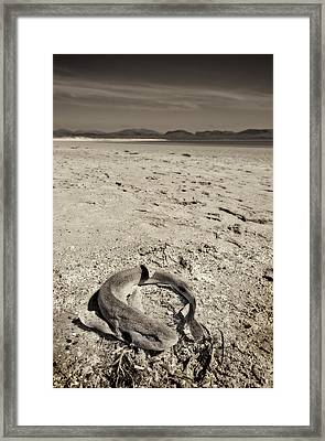 dogfish at Newborough Beach Framed Print