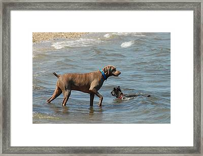 Dogs 21 Framed Print by Joyce StJames