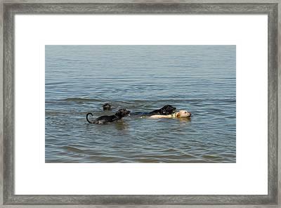 Dogs 32 Framed Print by Joyce StJames